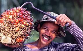 Senyum Petani Makin Lebar,  Harga Sawit Naik Jadi Rp2.241,15 per Kilogram