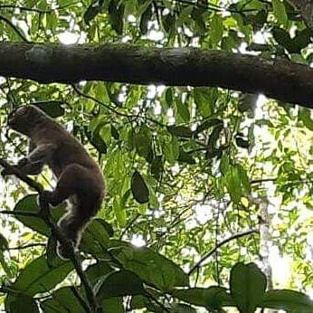 BBKSDA Riau Lepasliarkan Seekor Kukang ke Alam