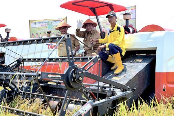 Bupati Rohil   Bersama  Plt Gubernur Riau  Lakukan Panen Raya di Rimba Melintang