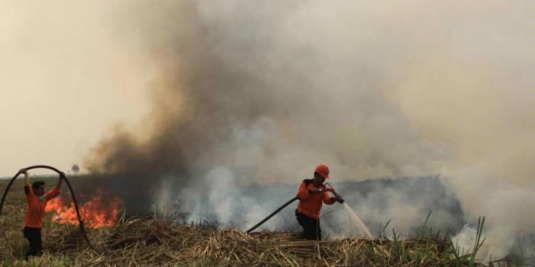 BNPB: Hampir Seluruh Langit Indonesia Tertutup Asap