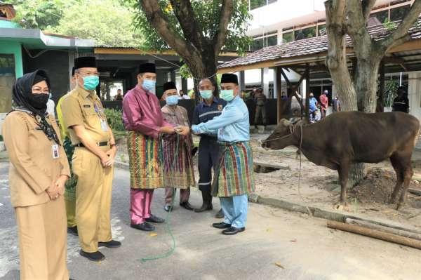 Pemko Pekanbaru Potong 44 Ekor Sapi, Wako Firdaus: Alhamdulillah...