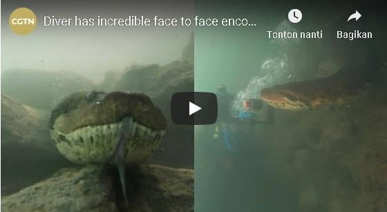SPOT JANTUNG, Saat Menyelam, Pria Ini Berpapasan dengan Anaconda Raksasa, Ini VIDEO Penampakannya...