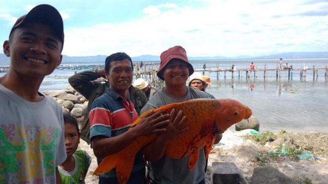 Heboh! Warga Tangkap Ikan Mas Raksasa Danau Toba, Tapi Ada yang Khawatir Musibah Besar Bakal Terjadi
