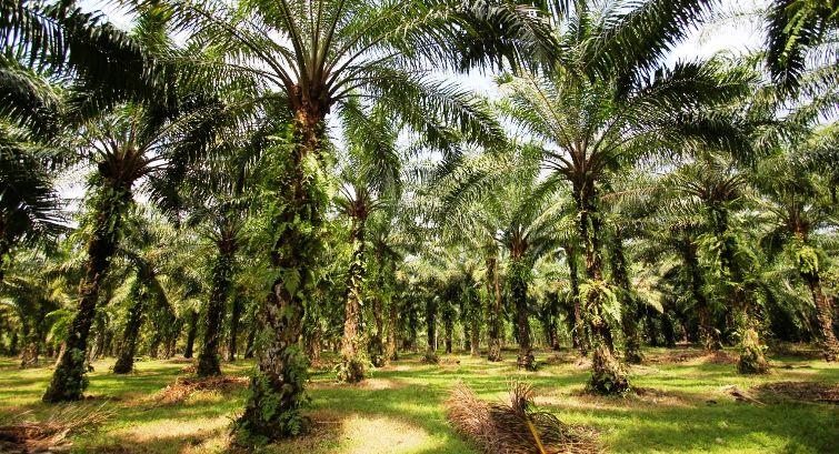 Korporasi Kuasai 70 Persen Hutan di Riau