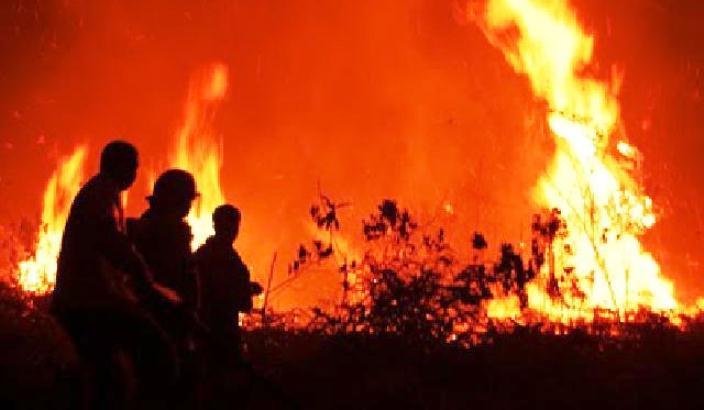 BNPB: Luas Karhutla di Indonesia Sama Seperti 32 Kali Luas DKI Jakarta
