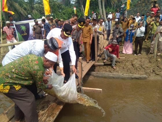 Bupati Rohil Taburkan Ribuan  Benih  Ikan ke dalam  Sungai  Rokan...