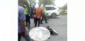 Ditabrak Mobil, Dua Pesepeda Terkapar di Jalan Sudirman, Seorang Meninggal Dunia
